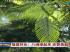 福建林业:八闽绿起来 还要美起来