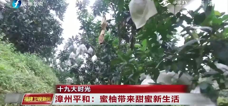 十九大时光 漳州平和:蜜柚带来甜蜜新生活