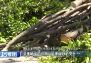 """福州:提前排险防御台风 园林部门为行道树""""减负"""""""