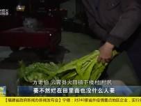 """云霄:""""农超对接+商超上门""""模式 解决农民销售难"""