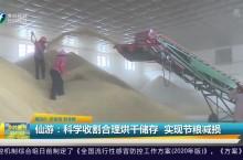 仙游:科学收割合理烘干储存  实现节粮减损