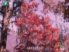 《纪录时间》一江清水向东流(三)