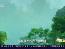 《风物福建》人在草木间·品越千年-20200529