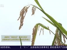 《风物福建》秋收·连江县