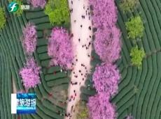 《清新福建旅游报道》福州:积极推进森林旅游产业发展