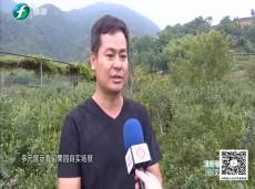 《清新福建文旅报道》厦门:乡村危房变身特色民宿