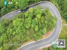 《清新福建文旅报道》福鼎市7万多亩栀子花进入盛开期