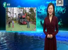 《清新福建文旅报道》全福游好去处为您推荐:红色溪柄 田园花海