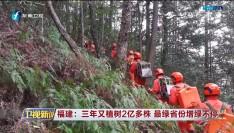 福建:三年又植树2亿多株 最绿省份增绿不停