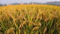 福建5个粮食生产示范市县各获省级补助50万元
