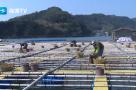 【海博首发】防疫复工两不误,霞浦海上养殖有序恢复