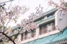 疫情下的清明节:最美四月天,读懂人生意义