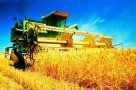 第三届中国粮交会福建参展企业大幅度增长 展示绿色、优质、特色、健康的粮油产品