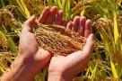 年产1.3万亿斤:中国粮食生产迈上新台阶