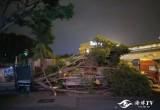 突发!福州国货路附近发生事故 一大货车刮倒路边大树和站牌