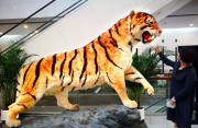 """我国将建""""大数据共享平台""""规范动物标本制作经营"""