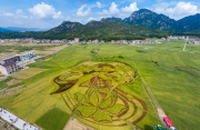 福建机收再生稻再生季产量再创新高