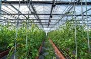 福建省农业科技创新联盟成立