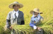 中国农民,节日快乐!