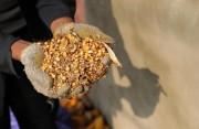 省外采購38000噸 福建省糧食庫存充足市場平穩