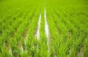 福建省级粮食储备库探索产业链协作 让储备粮常储常新