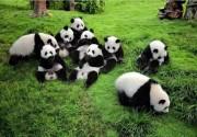 不只有熊猫和辣椒 他向台湾朋友讲述一个真实的四川