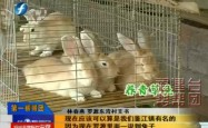 带动全村一起养殖兔子,发家致富,这个村支书厉害了!