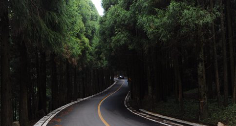 路边是茂密的杉树林,或是成片的花满枝头的羊蹄甲,山坡上布满了星星