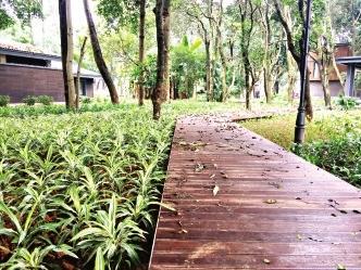 幽静的森林栈道