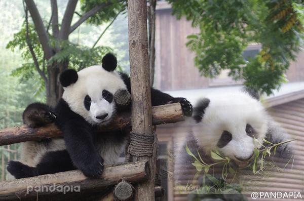 杭州动物园迎来两位新主子 性格迥异…_国内新闻_福建