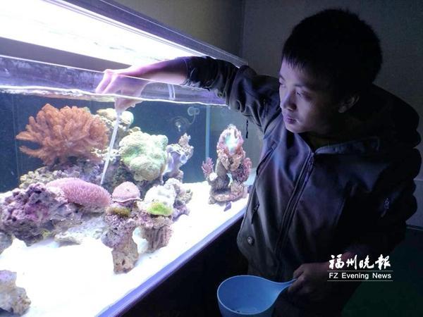 """闽侯孔元村繁育""""珊瑚海""""家中也能赏""""海景"""""""