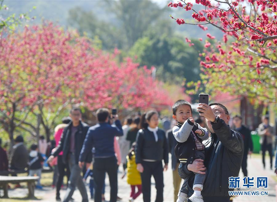 福建农林大学:春花满校园