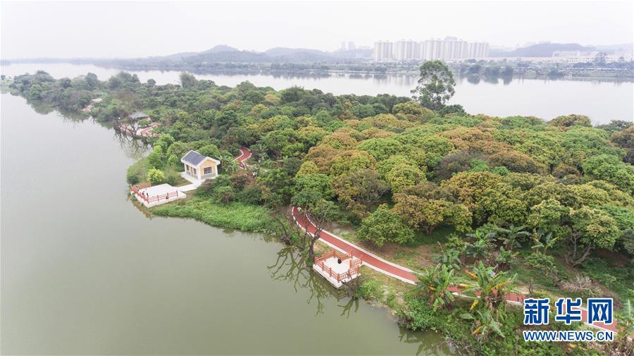 """(城市绿道建设·图文互动)(3)生活慢下来、村民富起来:广州3500多公里绿道打造城市""""幸福路"""""""
