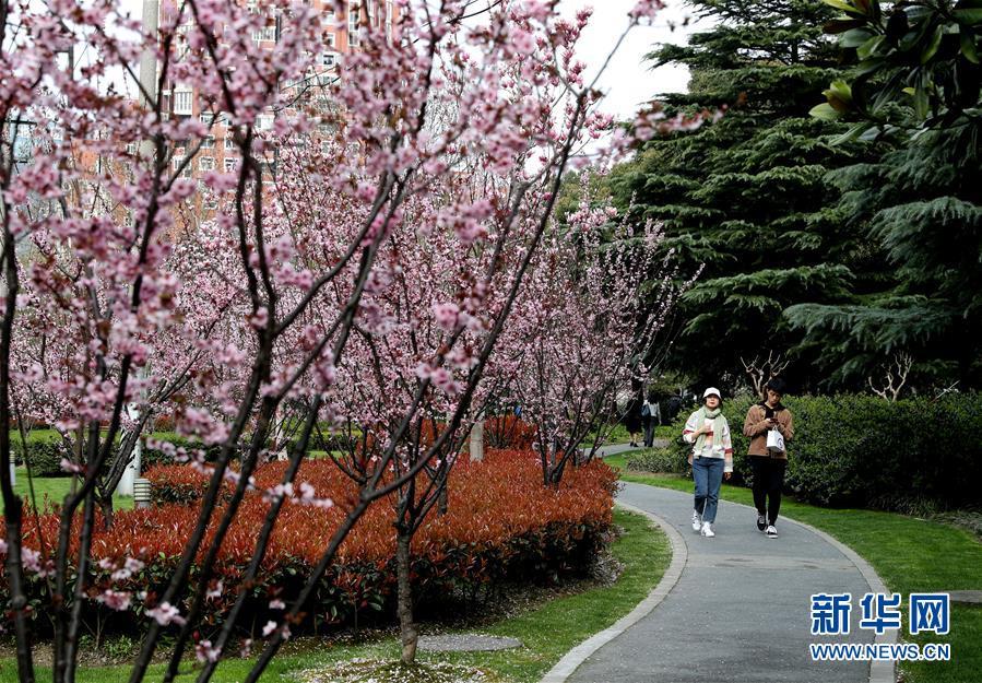 """(城市绿道建设·图文互动)(1)上海城市绿道:""""家门口""""的绿色,钢筋水泥中的""""生态密码"""""""