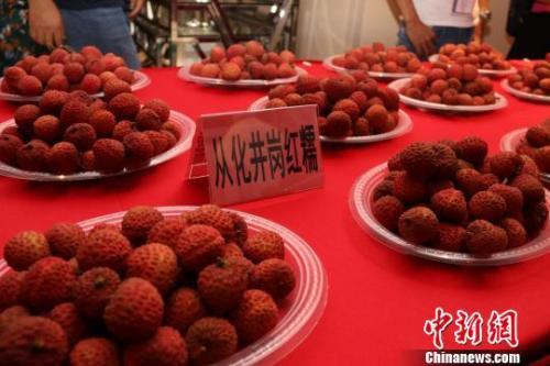 资料图:广州从化荔枝。 从化政府供图
