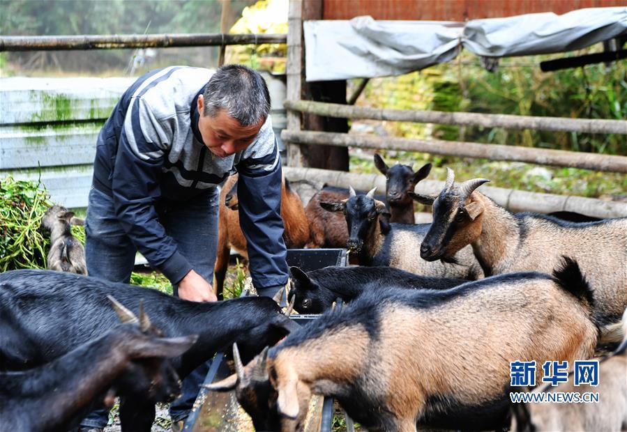"""(脱贫攻坚·图片故事)(8)昔日贫困户 今日女""""羊倌"""""""