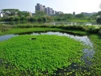 仙游县大济镇建设生态氧化塘