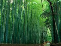 顺昌达成全国首笔竹林碳汇交易