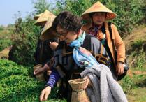 福州开春采茶活动吸引市民体验