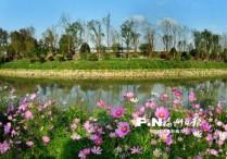 福州台屿河畔花如海