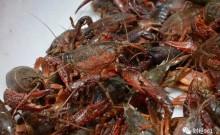 吃货要哭了!小龙虾价格又飙涨60%,资本入局搅动千亿元市场