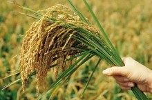 福州出台8条措施促进粮食生产
