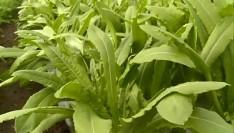 无土栽培,种出绿色健康蔬菜