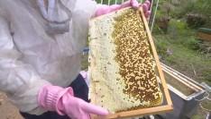 【致富有道】返乡青年传承养蜂技术,酿出甜蜜事业