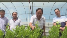 """【最美农技员】果树""""医生""""张生才: 永春芦柑产业复兴带头人"""
