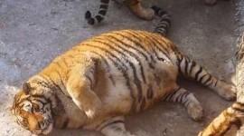 福州市动物园正面回应网友质疑 独家探班虎园后厨