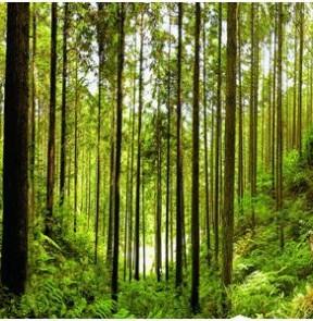 福建持续深化林改 释放绿水青山生态红利