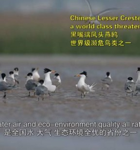 《福建省委的实践——绿水青山就是金山银山》宣传片亮相中联部
