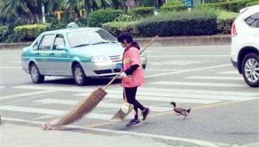环卫工每天带宠物鸭扫街