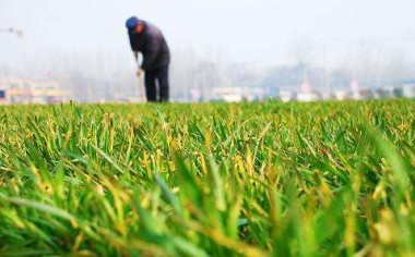 福建8个农业绿色高产高效创建项目获补助